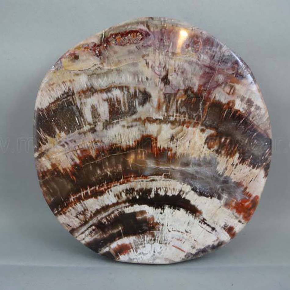 petrified wood polished slab